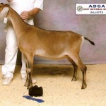 Maxim's paternal sister: Risin' Creek Dakota Katlyn 2007 ADGA National JR Champion